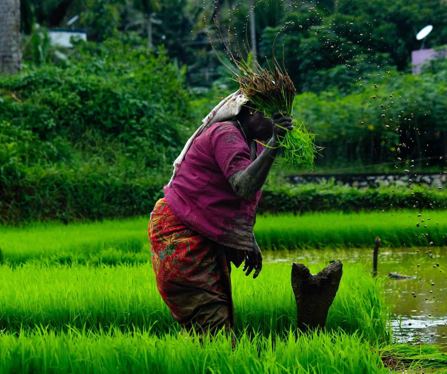 Feminization of Agriculture in the Himalayas